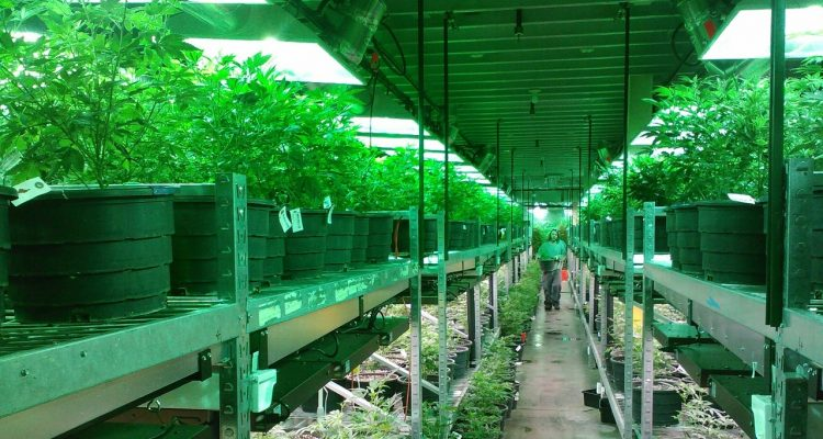 Knox Nursery Gets State Permission To Start Growing Pot