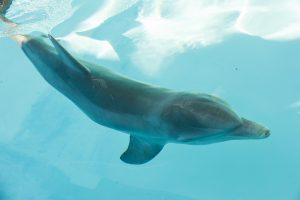 20161202_rescueddolphin_007