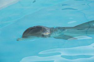 20161202_rescueddolphin_009