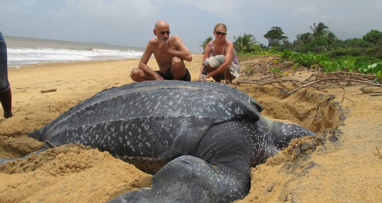 Beach Visitors Can Help Nesting Sea Turtles