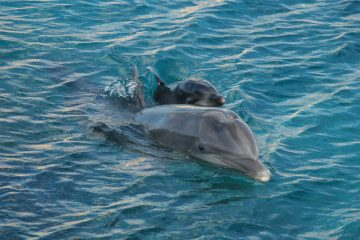 Dolphin Discovery Boat Tour Archives - Orlando Rising