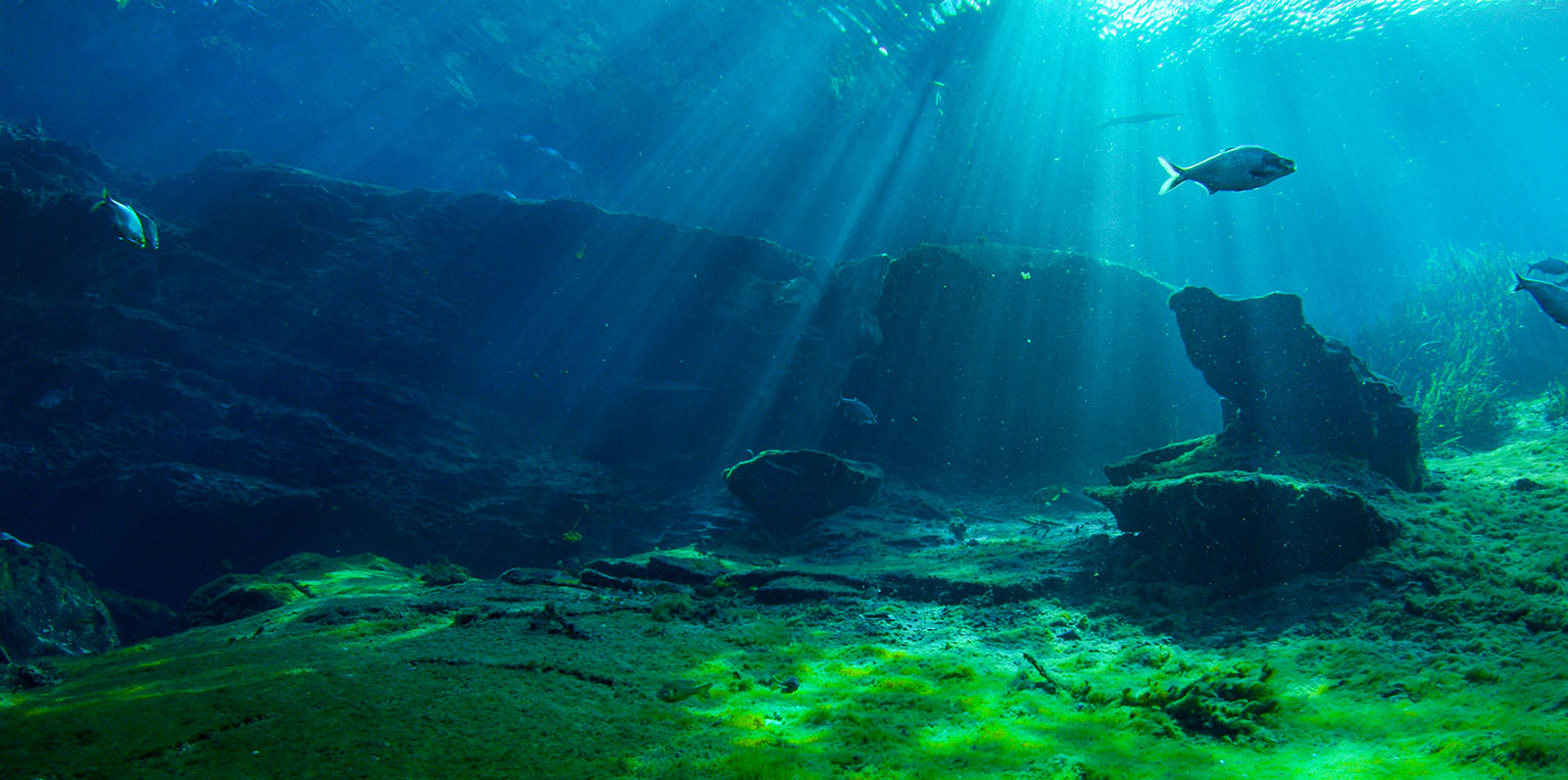 Florida Buys Land To Protect Silver Springs And Ocklawaha